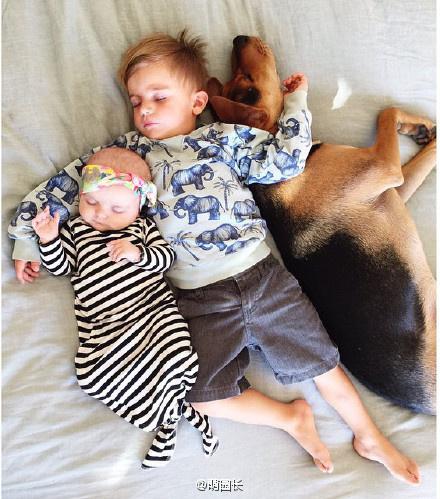 太有爱了 镜头记录宝宝与狗狗的午睡时光