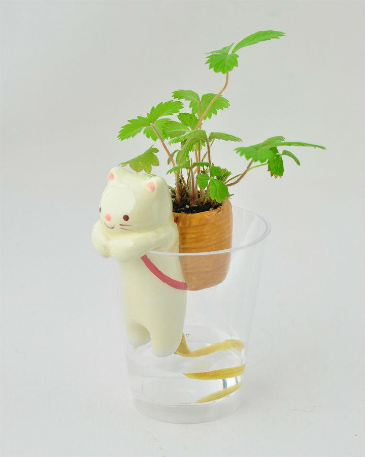 超萌迷你植物 动物尾巴吸水盆栽