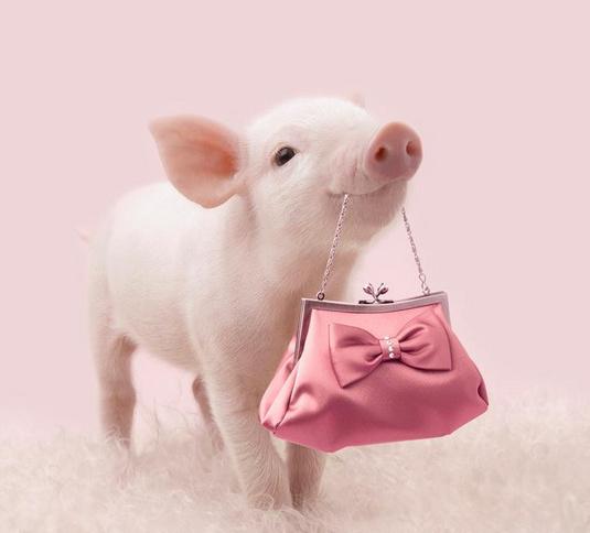 爆萌粉红大咖秀 一只猪猪的公主梦想