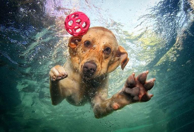 摄影师抓拍宠物狗入水超萌表情