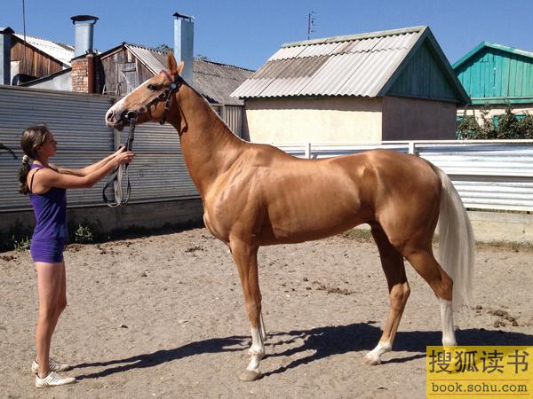 世界上最古老的,最独特的马种之一