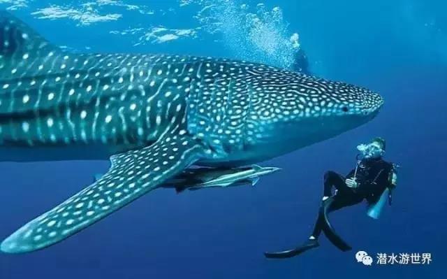 壁纸 动物 海洋动物 鲸鱼 鱼 鱼类 桌面 640_399