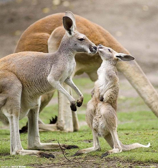 致敬母亲节:盘点有爱的动物亲子照
