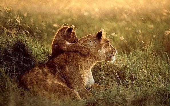 """最温馨的动物""""亲子照"""" 爸爸妈妈爱宝宝"""