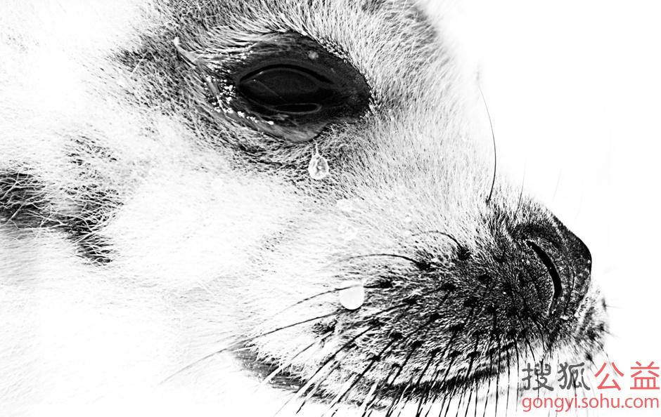 自然之殇:贸易中的野生动物-公益图片库-大视野-搜狐