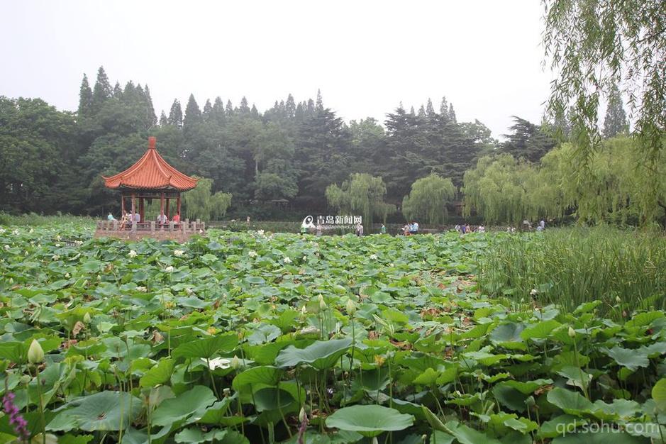 青岛中山公园青岛最大的综合性公园
