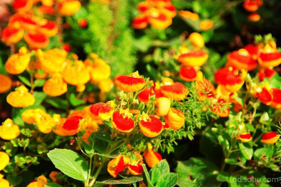 青岛世园会植物馆:奇妙的世界植物天堂(组图)