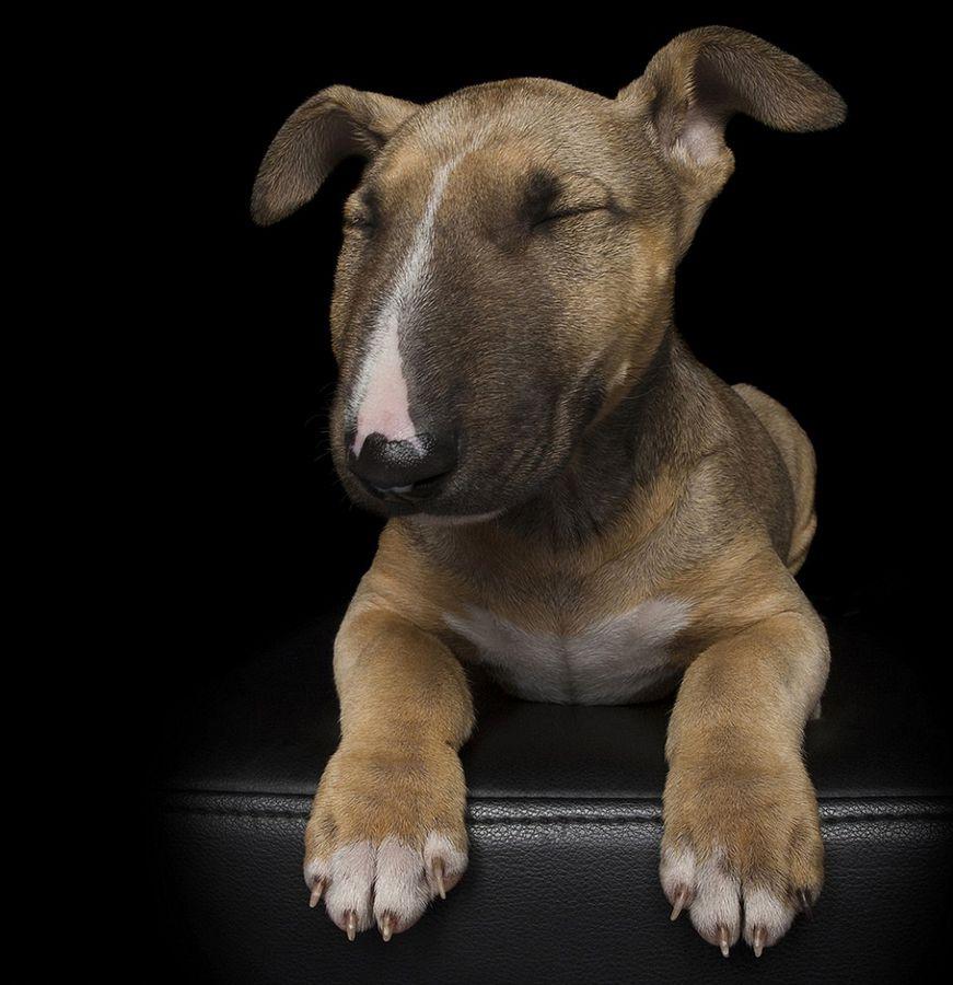 澳摄影师拍摄狗狗闭眼萌照