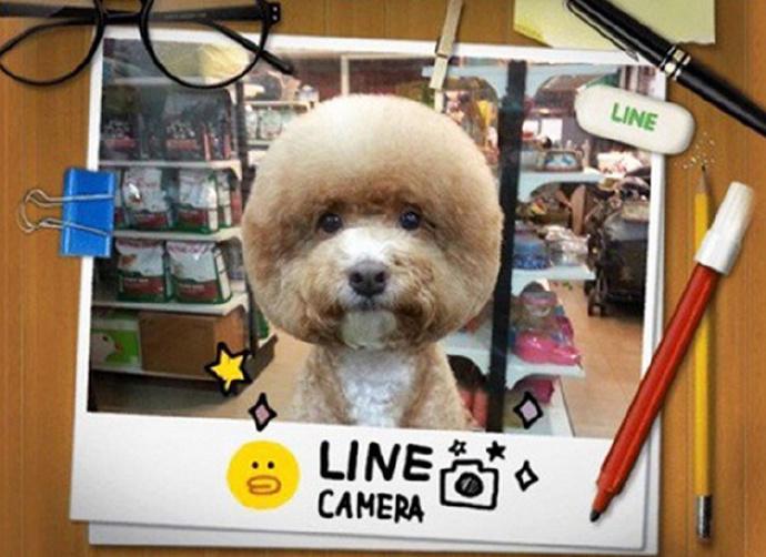 据日本新闻网站en.rocketnews24.com4月24日报道,近日,在台湾,一些潮狗的主人和宠物美容院的美发师给狗狗们做出独具特色的方形和圆形发型。如今,很多爱宠人士都会给自己毛茸茸的宝贝拍照发到社交网络上,宠物造型师的作用也随之越来越重要,人人都喜欢自己的宠物干干净净、毛修剪得整整齐齐。然而,这种奇特的造型只适用于某几种狗,因为只有这些狗的面部有足够多的毛发修剪造型。这些前卫的发型确实能吸引人的眼球。