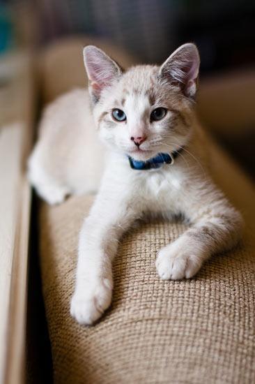 可爱猫咪认错图片