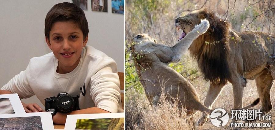 一系列野生动物照片