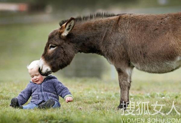 这么可爱的小动物是不是想领一头回家呢?