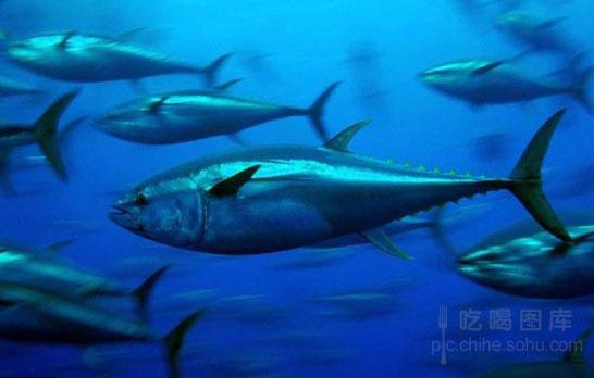 突然出现的长相吓人的怪鱼在当地引起了轰动,当怪鱼的照片被贴到脸书网(facebook)上后,很多人表示不敢再在此水域下水,但是专家认为这种担心完全是多余的并继续解释到,帆蜥鱼有着大帆状的背鳍,并确实有吃人的倾向,此鱼可以长到两米多,但是一般生活在大西洋深海,基本不会出现在浅水海域,更别说被冲上岸了,一个在这片水域呆了三十年的渔夫都称从未看到过这种鱼。所以专家推测这只引起轰动的帆蜥鱼其实健康状况令人堪忧。