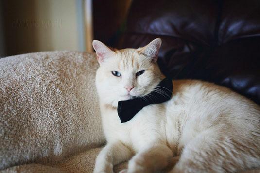女人频道 生活 连环画  这是sara的一系列猫咪摄影,照片的主角是自己