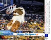 当地时间2012年7月23日,2013 豚鼠比赛日历发布。奥运会也在小豚鼠间展开,大大小小比赛一网打...