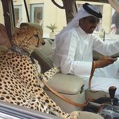 """近几年,迪拜几乎成为了奢华的代名词,人们一提起迪拜就想起""""土豪""""二字。外媒Buzzfeed将..."""