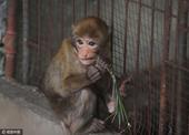 和猴砸做盆友是种什么感受?成都郫县长乐野生动物救助中心的汪星人说:我和两猕猴妹纸做邻居,它们有时萌萌...
