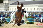 当地时间2012年8月11日,伦敦奥运男子现代五项马术障碍赛中,韩国选手赛马发狂将主人摔落马下。更多...