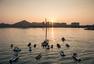 高清:沃尔沃环球帆船赛 东风队获第三赛段冠军