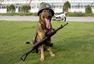 军犬日记:记录我的军旅生涯