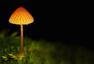 亭亭玉立的蘑菇    森林中的精灵