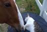 马儿和小猫结成好友 相依相伴如影随形