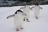 组图:中国南极长城站科考人员跑步锻炼身体