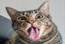 """猫咪吃""""猫薄荷""""表情大合集 吐舌打滚超可爱"""