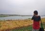 青岛母亲河大沽河治理显成效 绿树成荫白鹭齐飞