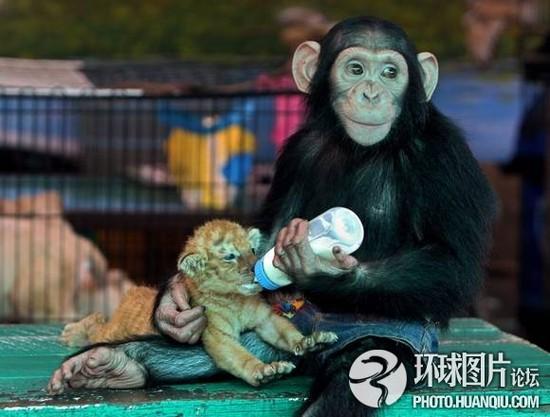 泰国动物园猴子