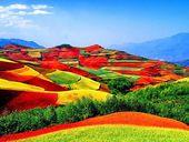 云南一年四季入春,低矮山上种植了不同种类的作物和茶,远处看去确实一片彩虹美景……