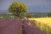 法国普罗旺斯大区美景