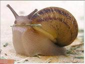 小动物们的超Q瞬间,只有两个字来形容:可爱!